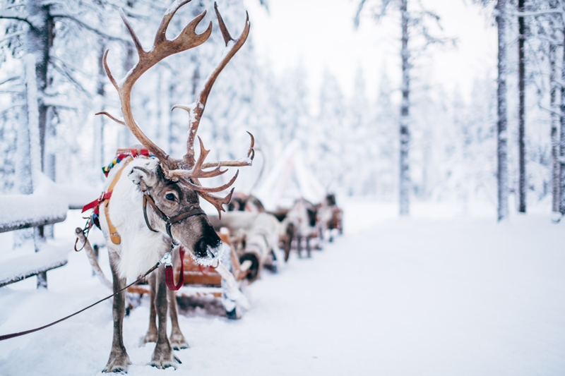 Copyright: Visit Rovaniem i/ Rovaniemi Tourism & Marketing Ltd.