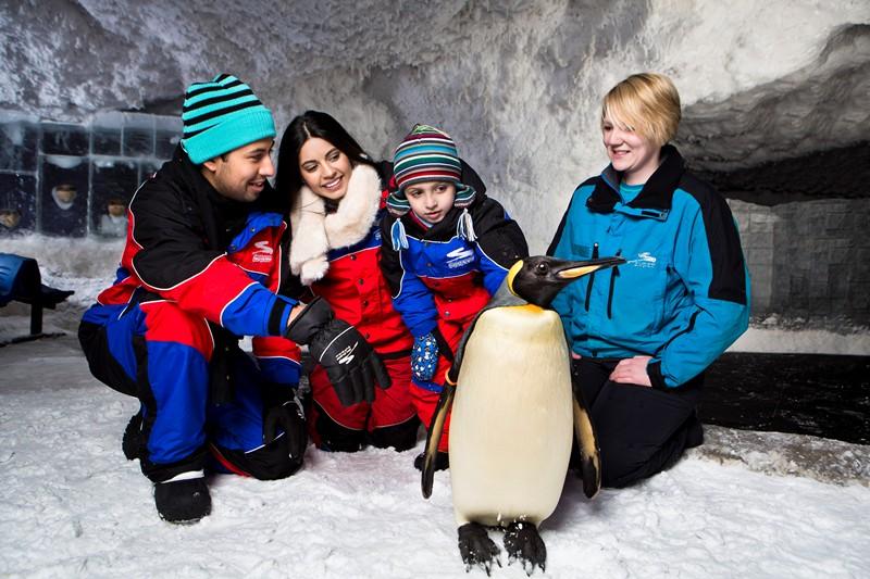 Ski Dubai - Da li je ovo PRAVI pingvin!?