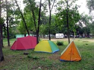 Kamp Tiski cvet