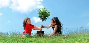 Corporate Social Responsibility - tree planting