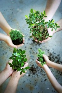 Corporate Social Responsibility - tree-planting