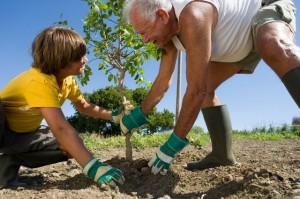 Korporativna društvena odgovornost - sađenje drveta