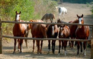 Prvi hotel za konje