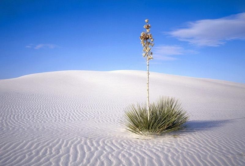 Pustinja od belog peska