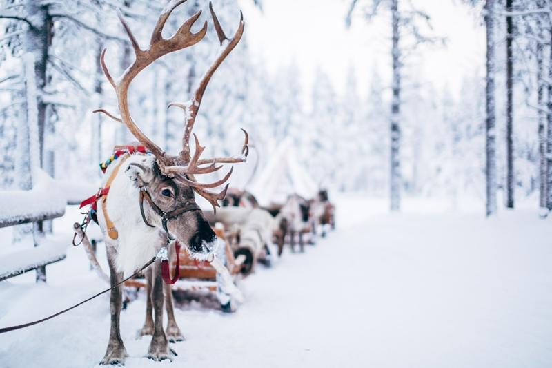 Copyright: Visit Rovaniem i/ Rovaniemi Tourism & Marketing Ltd.